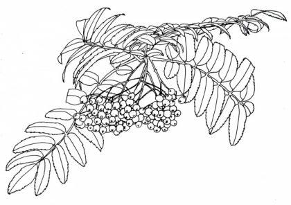 Cursus planten en bloemen tekenen naar de natuur July Leesberg Wageningen